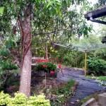Araliyas Garten